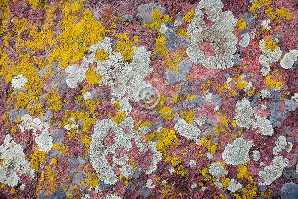 close ups, colorado, digital, front range, horizontal, lichen, red rocks park, rocks, winter, featured