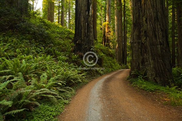 california, digital, dirt roads, forests, horizontal, prairie creek redwoods state park, redwoods, state parks, summer, trees, featured