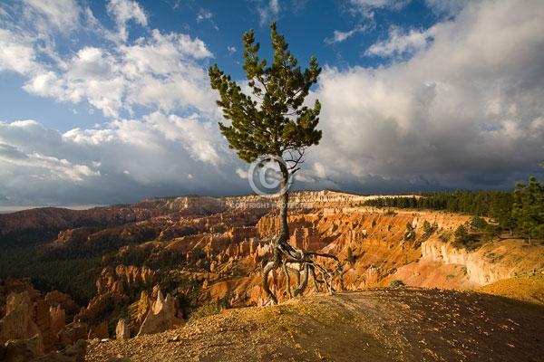 bryce canyon national parks, deserts, digital, horizontal, national parks, summer, trees, utah, featured