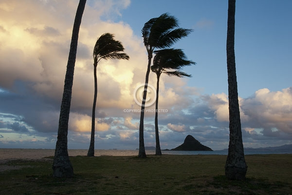 chinaman's hat, clouds, digital, hawaii, horizontal, islands, kaneohe bay, kualoa regional park, oahu, palm trees, sunsets, winter, featured