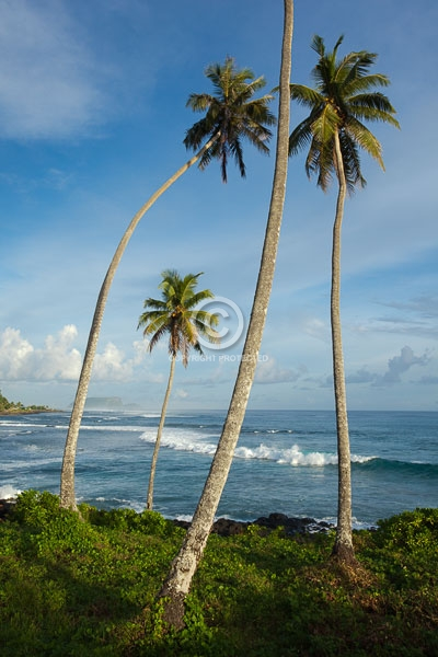 digital, islands, oceania, palm trees, south pacific ocean, summer, upoluu island, vertical, waves, western samoa, featured