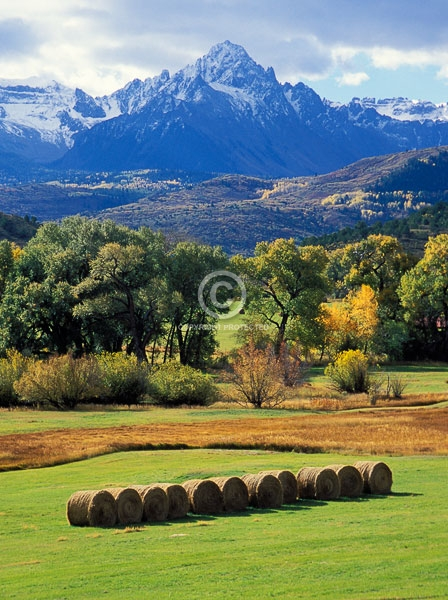 14ers, 14000, autum, colorado, cottonwood trees, dallas divide, fall colors, feet, foot, fourteeners, hay bales, mount sneffel, ranches, rocky mountains, san juan mountains, vertical, featured