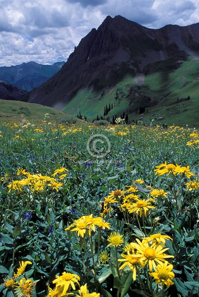 colorado, rocky mountains, san juan mountains, stony mountain, summer, sunflowers, vertical, wildflowers, featured