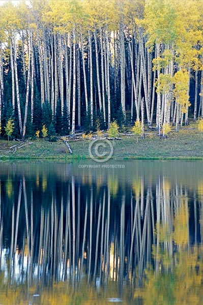 colorado, vertical, lakes, ponds, aspen trees, autumn, reflections, fall colors, owl creek pass, cimarron mountains, featured