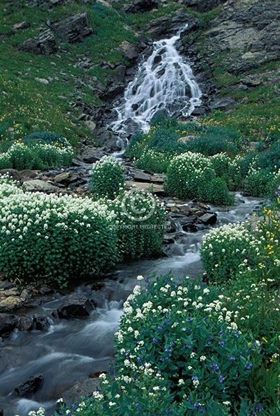 colorado, vertical, waterfalls, streams, creeks, clear creek, san juan mountains, flowers, wildflowers, summer, featured