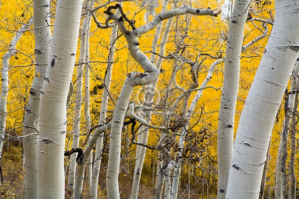 cimarron mountains, colorado, owl creek pass, san juan mountains, aspen trees, autumn, digital, forests, horizontal, featured