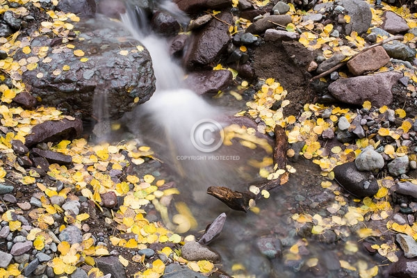 colorado, san juan mountains, aspen leaves, autumn, close ups, creeks, digital, horizontal, leaf, streams, featured